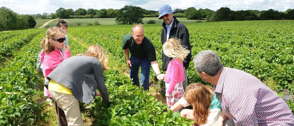 Sainsbury's teams up with local farmers to celebrate Open Farm Sunday