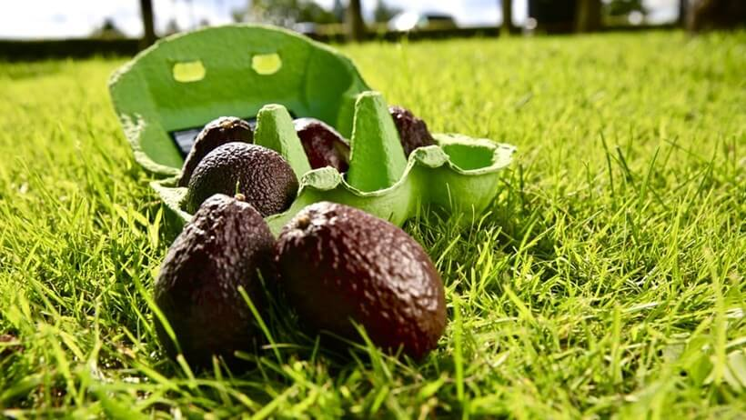 Tesco tackles food waste with mini avocado trial